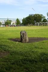 (Takanori Kishikawa) Tags: park flower tree grass rock japan canon tokyo toyosu kotoku lalaporttoyosu