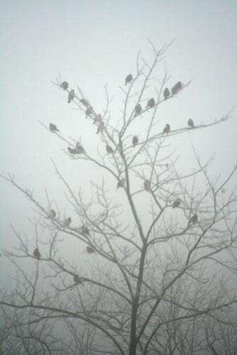 crowsInTree