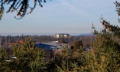A new view of Autzen (Auzigog) Tags: park street city tree skyline oregon glare branches aerialview aerial bamboo climbing evergreen bark uo tall uofo eugeneoregon autzen redwoodtree autzenstadium