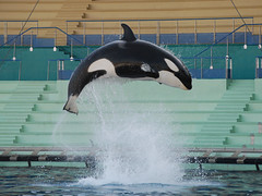 Amazing Heights (Caveni) Tags: dolphin orca antibes marineland orque marinelandantibes
