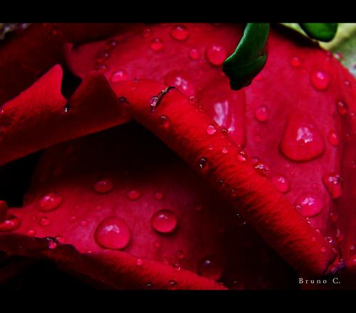 http://farm4.static.flickr.com/3081/2484166810_8f53d31546.jpg