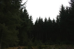 (sarah  brown) Tags: trees sky pine forest fir spruce