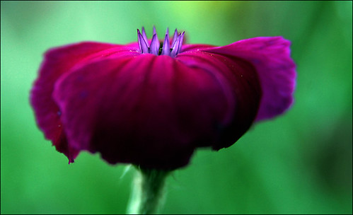 flower_0240