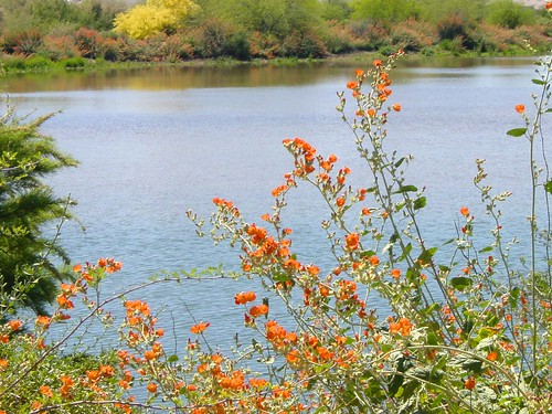 Arizona Urban Lakes - Water Ranch