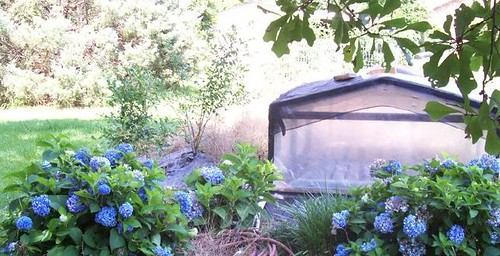 Hydrangeas and mini greenhouse