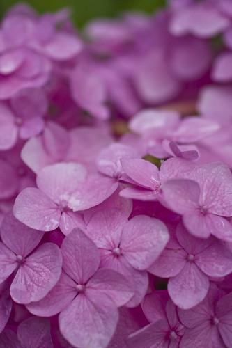 rainy pink
