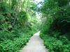 pista nel bosco