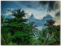 Palms before storm (maistora) Tags: life blue trees sky storm color colour green nature clouds palms thailand grey bush holidays asia day cloudy culture jungle thai kohsamui samui chaweng tropical handheld dri hdr blending tonemapping 3exposure golddragon maistora hdraward yahoo:yourpictures=weather