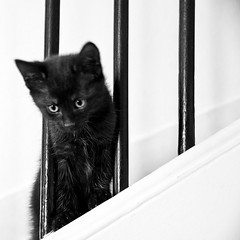 Passe-partout (Gregory Bastien) Tags: blackandwhite bw cats pets paris france animal animals cat chats kitten chat noiretblanc kitty kitties animaux facebook chaton chatons pentaxk10d gregorybastien parisianphotography ildedefrance