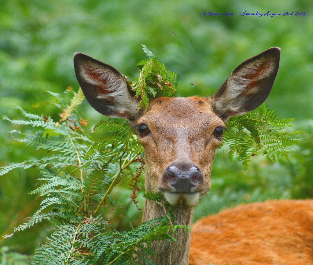 how to keep deer from eating my plants