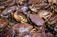 Mercado de Porto. Carangejos (maaht) Tags: crab cangrejos