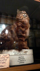 Binks the 80-year-old taxidermied cat, Bates Hatters, Jermyn Street, London, UK.JPG (gruntzooki) Tags: uk london hat sign cat weird funny smoking taxidermy tophat bates tasteless binks jermynstreet hatters bateshatters