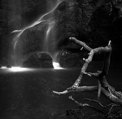 the lightning and the tree (Ray Byrne) Tags: blackandwhite bw tree broken waterfall monotone symmetry northumberland northumbria squareformat linn parallel routinlinn raybyrne routinlynn roughting roughtinglinn byrneoutcouk webnorthcouk