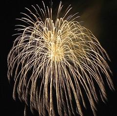 Gold Brocade (EpicFireworks) Tags: star fireworks guyfawkes firework burst pyro 13g epic barrage pyrotechnics sib