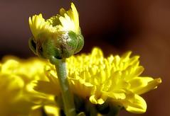 DSC_0069 (2) (marksontok) Tags: flowers arizona cactus birds desert macros lizards oleander bouganvilla whitetankmountainsaz