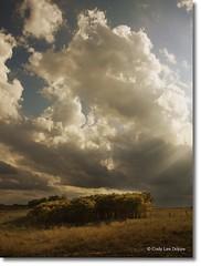 Tree Grove (Cody Lee Dopps) Tags: ranch autumn trees light fall field clouds rural golden nikon farm rays nikkor sunbeam 18105 d90