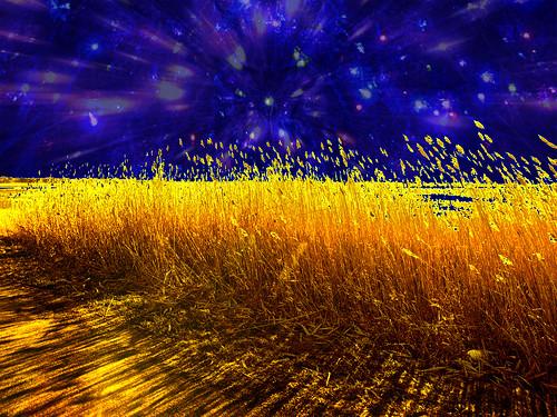 Cold Reeds Xmas Sky