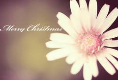 Peace & Joy (Lee_Bryan) Tags: lyrics bokeh merrychristmas worldpeace  michaelbubl 100mmf28macro  ehbd