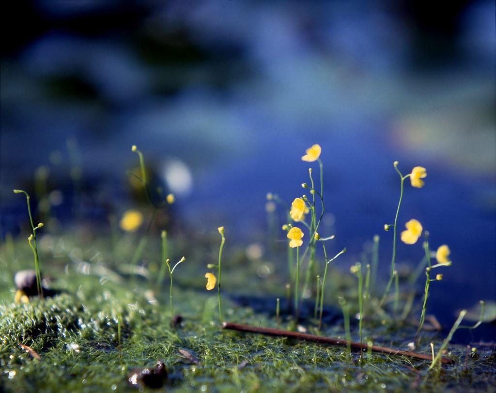 Somewhere amongst the lotus