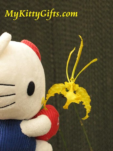Hello Kitty Watching a Yellow Butterfly-like Orchid