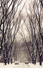 Mine (margolove) Tags: road street trees winter columbus ohio snow tree wonderful calle pavement snowstorm corridor freezing flakes nieva