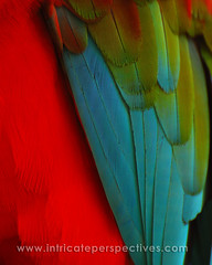 Colorful Feathers (IntricatePerspectives) Tags: blue red green beautiful colorful feathers parrot macaw stmaarten royalcaribbeancruise freedomoftheseas
