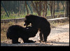 xDSC_1739 copy (sajeshjose) Tags: camp wildlife bangalore sash bannerghatta sajesh bennerghatta ireboot