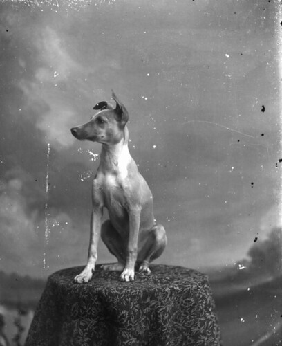 Dog posing on table par State Library and Archives of Florida