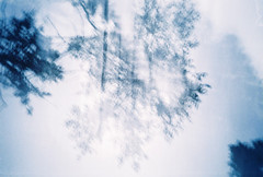 (-Antoine-) Tags: blue winter abstract tree film analog 35mm iso100 lomo lca exposure december fuji doubleexposure hiver double bleu exposition qubec invierno 100 abstraction analogue 2008 doubleexposition doublexp arbre dcembre decembre abstrait fujicolor lca2 lomokompactautomat lomocompactautomat f1000013 dcembre antoinerouleau