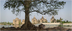 histree, orchha (nevil zaveri) Tags: travel trees panorama india tree heritage architecture river landscape photography blog poetry poem photographer photos stock images poetic mausoleum photographs photograph rivers destination historical mp monuments zaveri stitched tombs stockimages pradesh travelogue nevil madhyapradesh orchha madhya cenotaphs betwa bundela theverybestofme nevilzaveri
