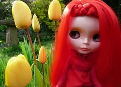 Mog & yellow tulips