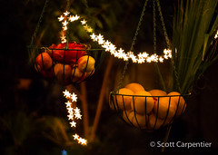 365 Project Year 4 - 46.jpg (tharn photography) Tags: arizona food phoenix fruit night lomography bokeh places palmtree hanging apples oranges dragonfruit ahwatukee 365project bokehshapes canon6d tharnphotography petzvalartlens