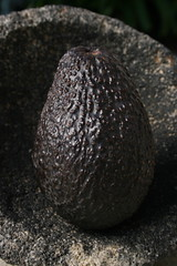 Avocado (Greg @ Flickr) Tags: food avocado comida alimento mexican aguacate palta molcajete casagregorio