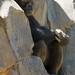 Los Angeles Zoo 060