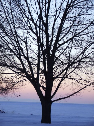 tree.blue.ice