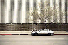 .The Lonely Tree (pt 2). (Pacha Mama Photography) Tags: street urban tree car design photo losangeles los pattern savedbythedeletemegroup angeles deleteme10 photojournalism documentary line saveme10 sidewalk hood lonely shape minimalist broke journalism brokedown top20la safedomino