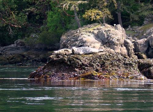 2008-05-04 Coal Island 384