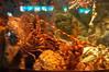 DSC_0511 (sener_tr) Tags: ispanya spain barcelona barselona aquarium akvaryum fish balık pisces aqua water animal hayvan zvirat animalsk dierlijke elainten animaux tier animali dyr zwierzat animales animaliskt avrupa europe submerge submerged underwater fishtank tank photo photograph turkishphotographer travel vacation gezi seyahat europa