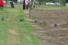 Priory Farm Discovery Walk #28