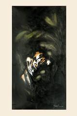 TIGER (donatellaribezzo) Tags: china africa bear old portrait horses italy horse india lake elephant milan ceramica bird eye art face birds animal animals cat work painting tanzania mammal star hotel cub swan eyes italian wolf paint milano tiger sudan leoni lakes lion quadro occhi swans leopard tigers zebra oil works hotels puma ethiopia serengeti rana mammals cougar gatto cavalli cavallo lioness occhio orsi cougars quadri donatella elepahnt leopardi fenicotteri savana dipinti lupi fenicottero yourmasterpaintings ribezzo afpov flickrbigcats