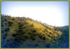 shortcuts, its what i do (Sallyanne Morris) Tags: california foothills mountains northerncalifornia spring scenic hills yosemite sierras oaks daybreak shortcuts saveearth tulomnecounty wardferryroad