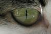 Magic Mirror - color (detail) (elendir) Tags: cats pets selfportrait reflection eye cat autoritratto gatto occhio gatti tigre riflesso