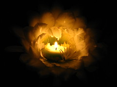 Fire in a cactus flower (Boonlong1) Tags: cactus flower fire lowlight candle nightshot earthnight floweringcactus