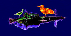Florescent Birds of the Marsh (Rusty Russ) Tags: ocean camera flowers trees party summer arizona sky usa color bird art cars love beach nature strange graveyard rose contrast america photoshop manipulated john fun island fly photo yahoo google interesting twilight colorful flickr image president great picture plum picasa super myspace best psycho hillary fav olympic newsroom republican universe rare democrat j1 northernlights 08 chirp refuge saturate c1 barack stumbleupon flyingcars roseflower freeimage psdtuts