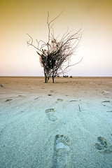 "LOST ""Color Version"" (Khaled A.K) Tags: tree photography footprints surreal step jeddah saudiarabia khaled footprint ksa aplusphoto"