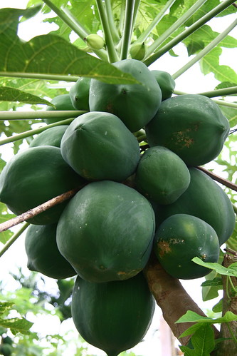 Papayas