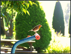 bird song (stefanskimariusz ) Tags: windows color bird woodland garden hotel photo arms natural zoom kodak lord crew dew blanchland
