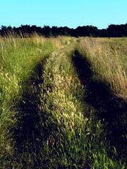 Sunset, Fields (manu/manuela) Tags: summer france landscape corn estate champs poppies fields t paysage francia italians papaveri grano bl campi coquelicots leder  paesggi risland isoladir