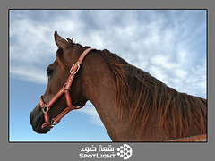 (A.Alwosaibie) Tags: light portrait sky horse hair photography nikon picture spot d60               ysplix