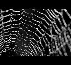 Radnetz (Petra Rettberg PhotoWerkStadt) Tags: canon bayern photographie petra pr rettberg memoria bogen imago aplusphoto pöhlde fiveflickrfavs degernbach peachofashot icicle69 wwwimagomemoriade